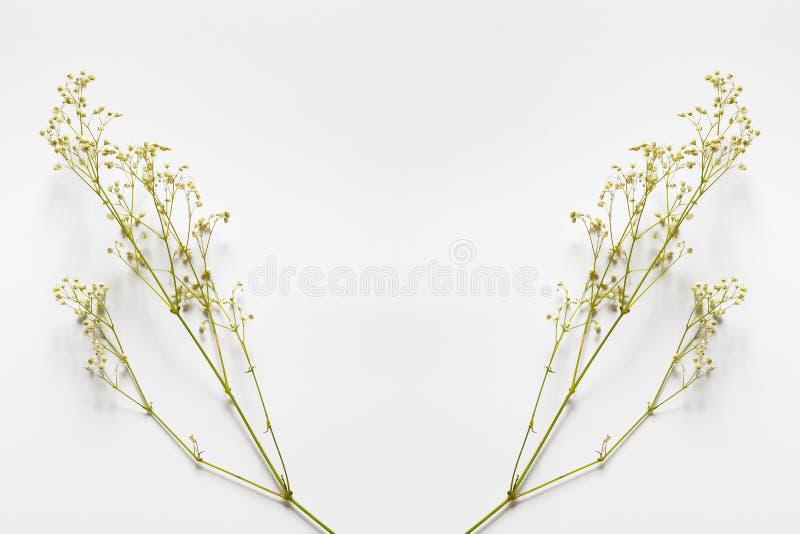 Ramos com as flores amarelas pequenas em um fundo branco fotos de stock