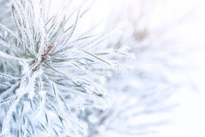 Ramos congelados de encantamento no fundo do inverno imagem de stock royalty free