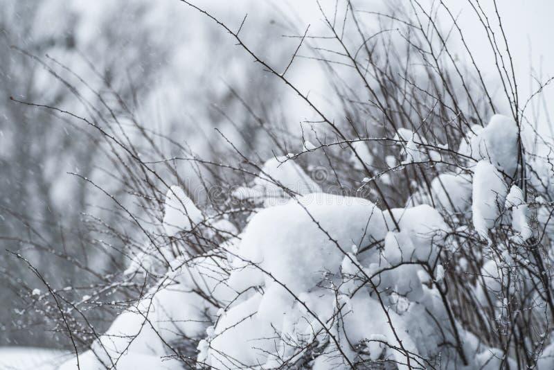 Ramos congelados do inverno da árvore calva com fundo nevoento da paisagem do inverno O fundo do inverno com neve ramifica as fol foto de stock royalty free