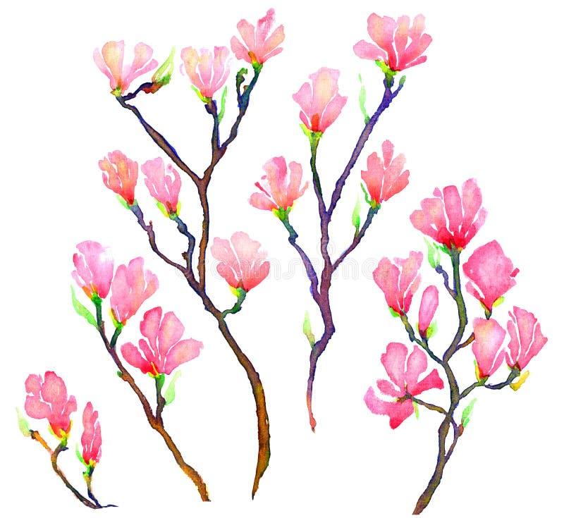 Ramos cor-de-rosa da magnólia ajustados isolados ilustração do vetor