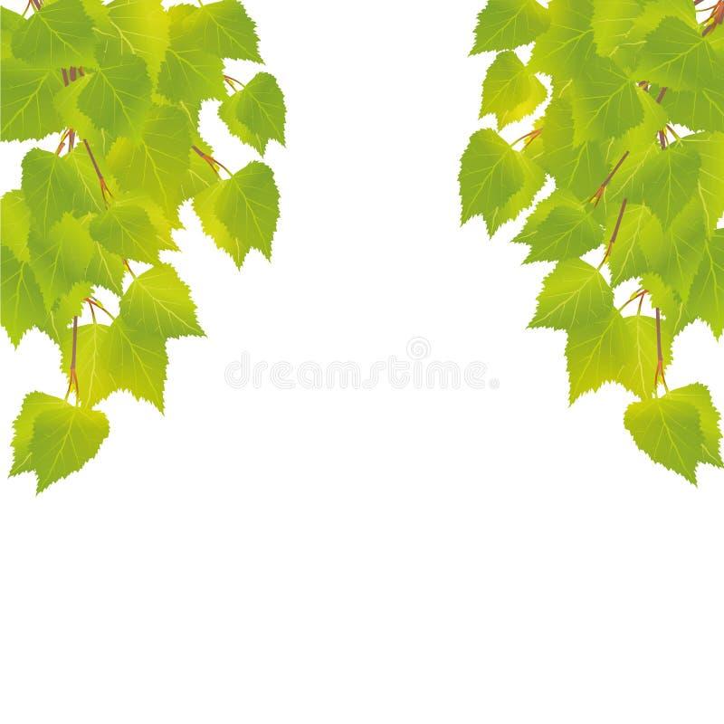 Ramos da árvore de vidoeiro nova com folhas ilustração do vetor