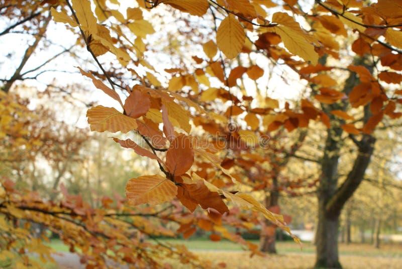 Ramos da árvore e das folhas foto de stock royalty free