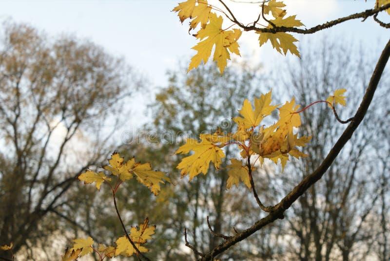 Ramos da árvore e das folhas fotografia de stock royalty free