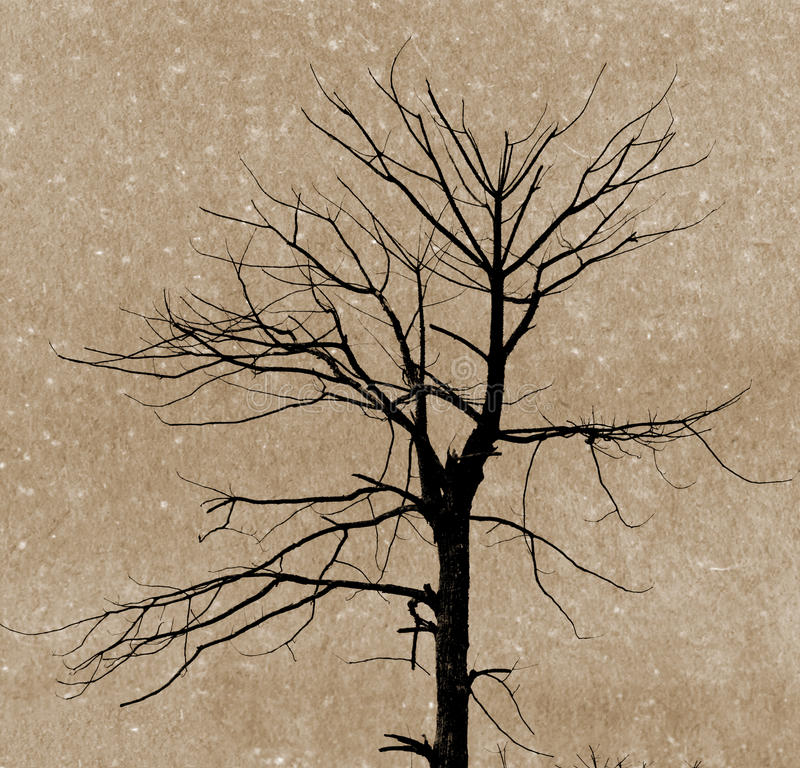 Ramos da árvore inoperante ilustração royalty free