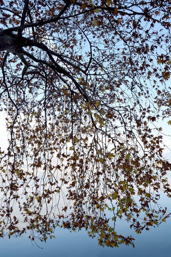 Ramos da árvore plana imagens de stock