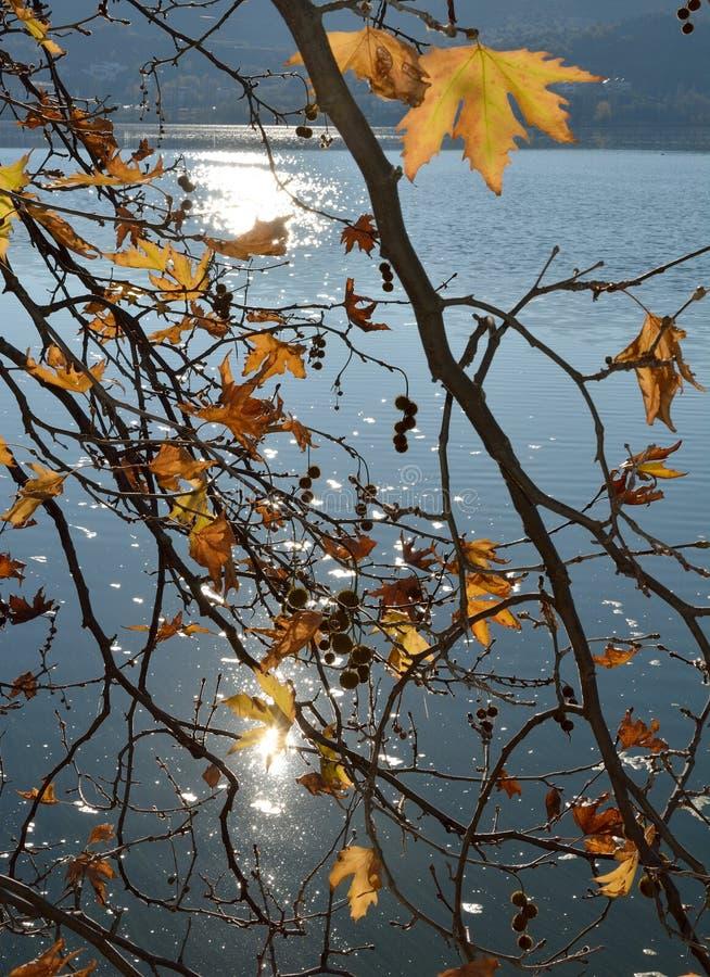 Ramos da árvore plana foto de stock