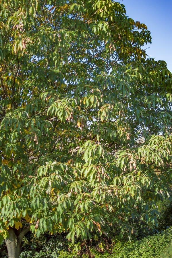Ramos da ?rvore verde plantados em Hyde Park fotos de stock royalty free