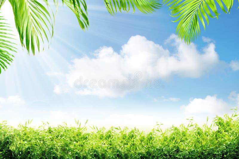 Ramos da grama verde e da palma com luz solar imagens de stock royalty free