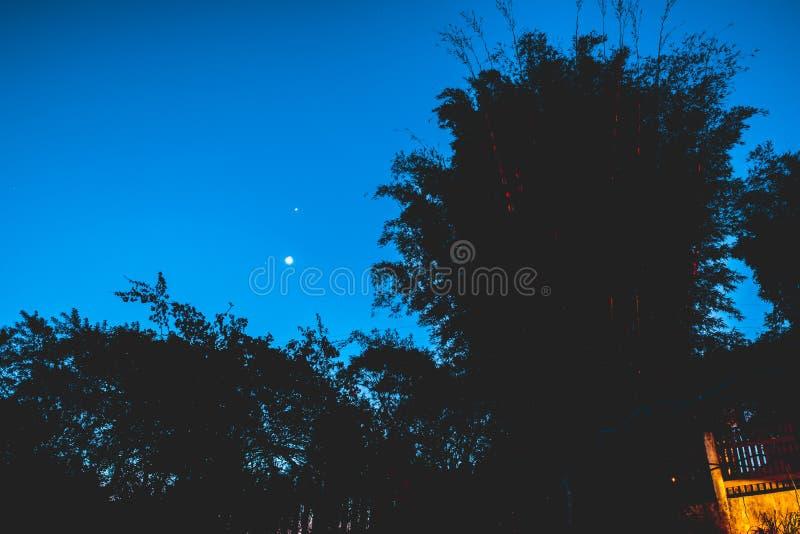 Ramos da Lua cheia e de árvore foto de stock royalty free