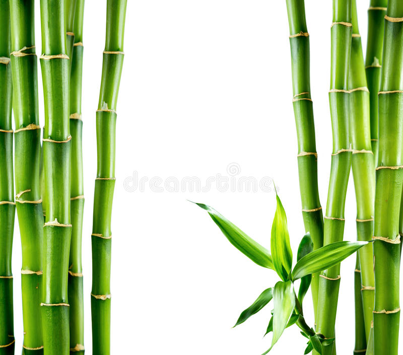 Ramos da placa de bambu imagens de stock