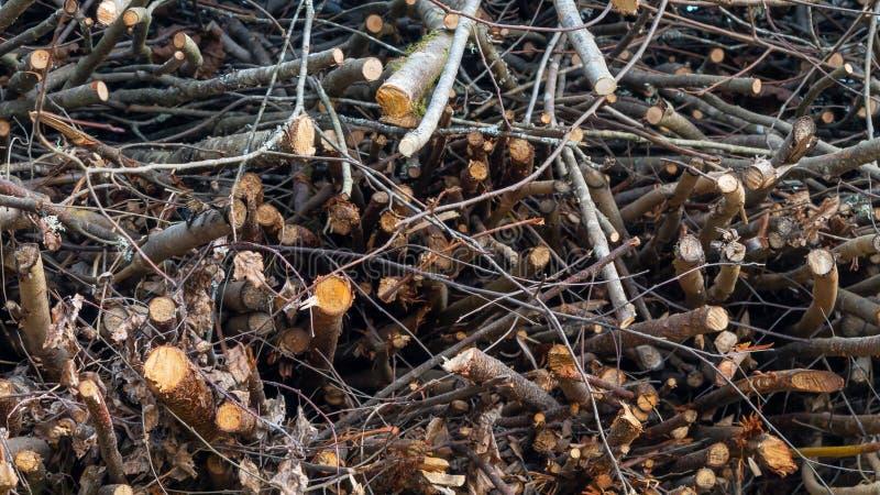 Ramos das ?rvores empilhadas em uma pilha, fundo, textura foto de stock royalty free