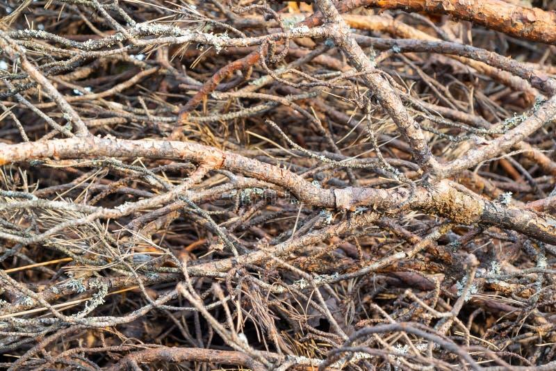 Ramos das ?rvores empilhadas em uma pilha, fundo, textura imagens de stock royalty free