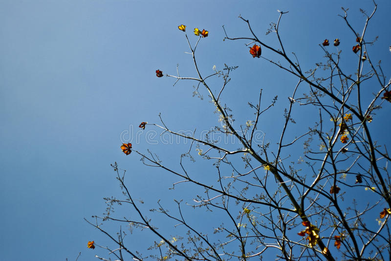 Ramos de árvore fotografia de stock royalty free