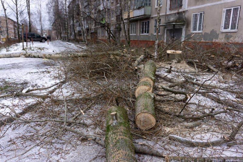 Ramos de árvore caídos no jardim da frente da casa imagem de stock