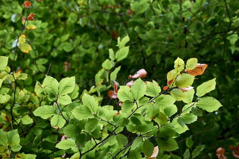 Ramos de árvore com folhas verdes imagens de stock royalty free