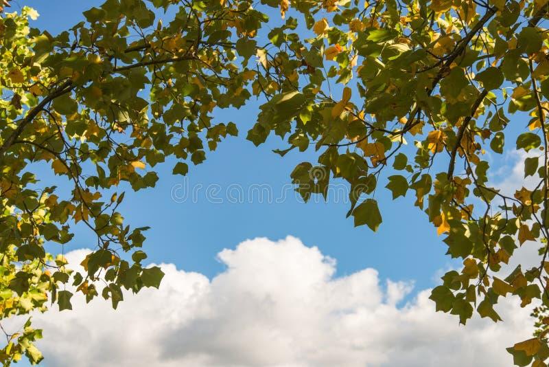 Download Ramos de árvore foto de stock. Imagem de foliage, brilhante - 29832240