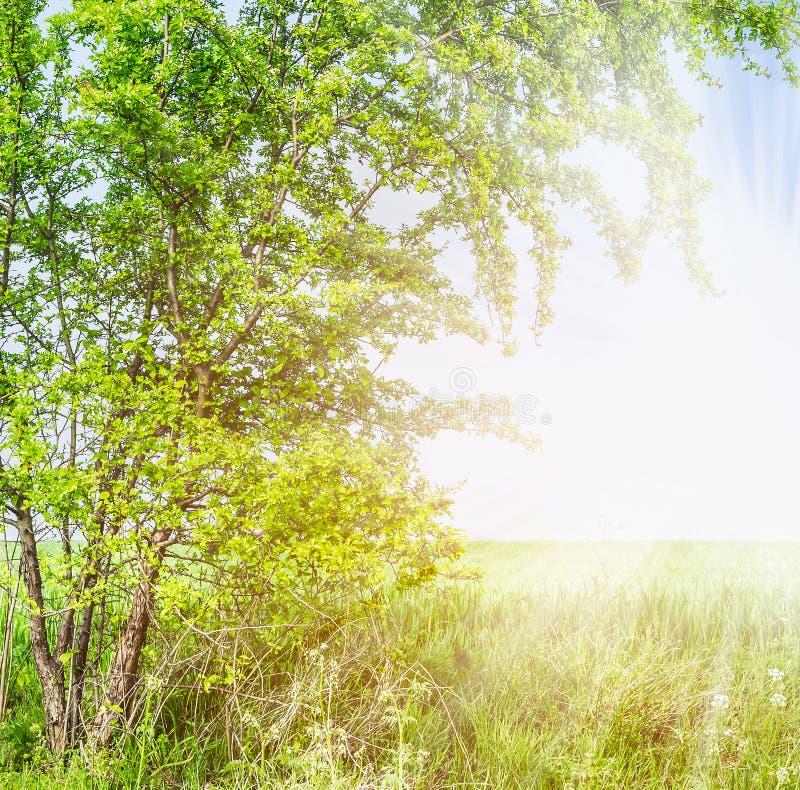Ramos de árvore curvados do espinho na luz solar do verão fotos de stock royalty free