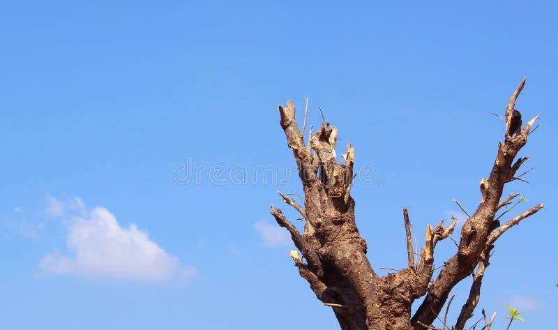 Ramos de árvore de Cutted com céu azul e nuvens fotos de stock royalty free
