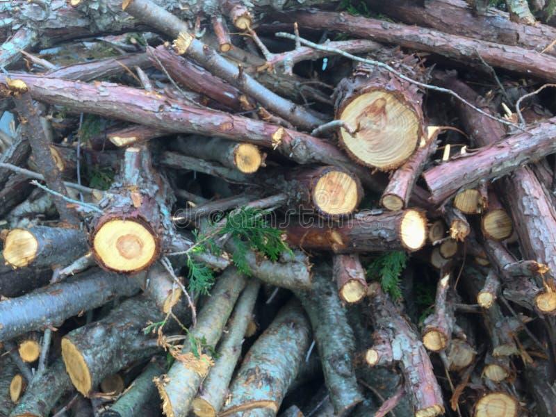 Ramos de árvore desbastados fotografia de stock royalty free