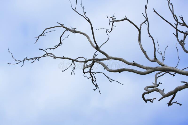 Ramos de árvore desencapados foto de stock royalty free