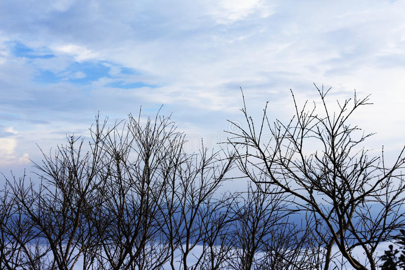 Ramos de árvore desencapados em um céu pálido azul fotografia de stock