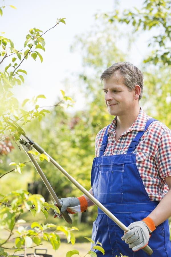Ramos de árvore do grampeamento do jardineiro no berçário da planta imagens de stock
