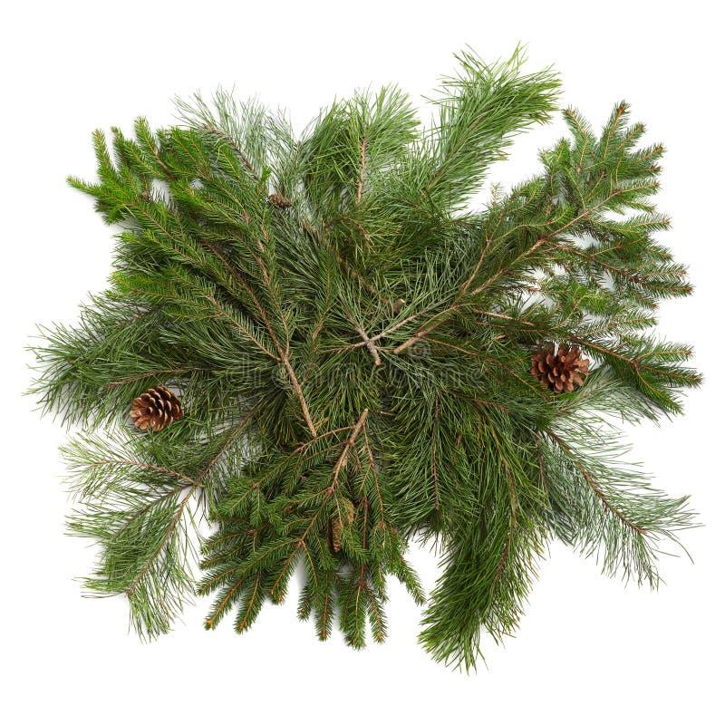 Ramos de árvore do Natal com beira dos cones sobre o branco fotos de stock