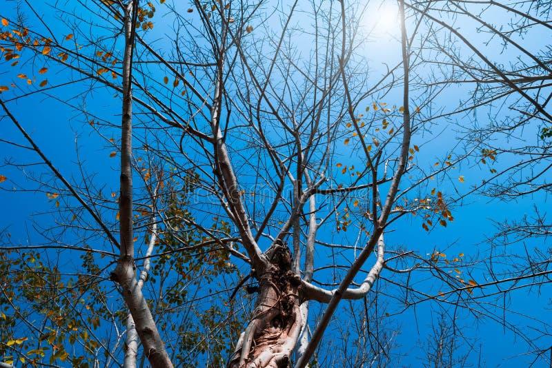 Ramos de árvore do outono fotos de stock