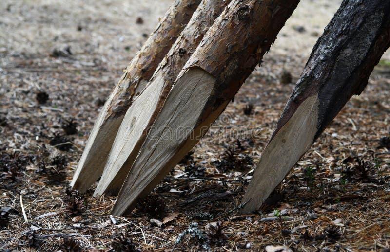 Ramos de árvore executados dentro a uma cerca foto de stock royalty free