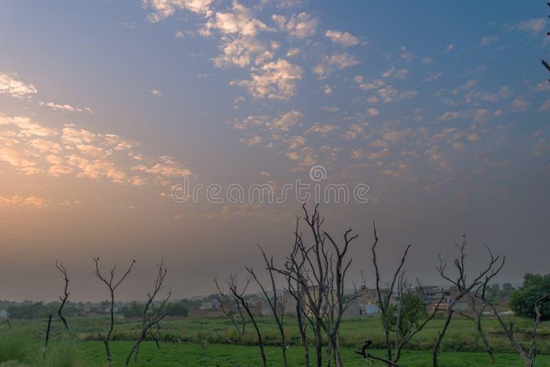 Ramos de árvore inoperantes com formação do céu azul e das nuvens imagem de stock