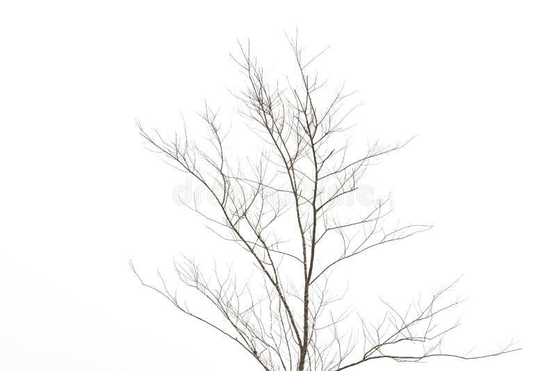 Ramos de árvore leafless isolados imagens de stock royalty free