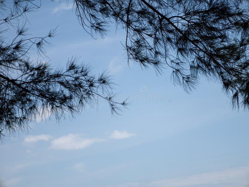 Ramos de árvore naturais contra o céu azul fotos de stock royalty free