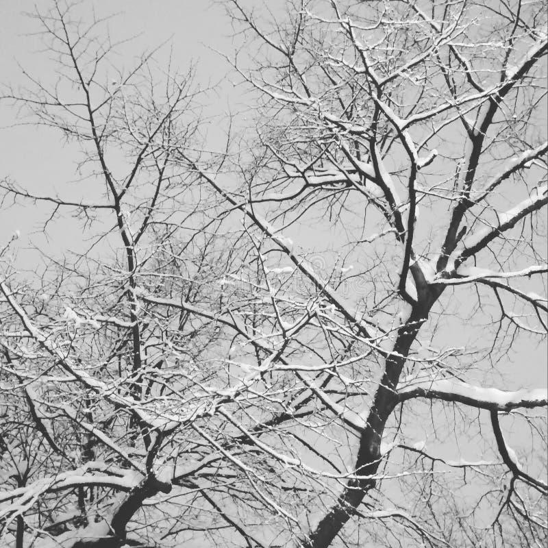 Ramos de árvore negativos foto de stock royalty free
