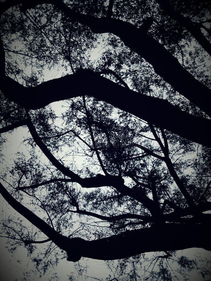 Ramos de árvore no por do sol fotografia de stock royalty free