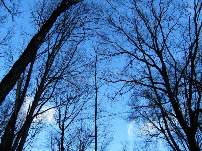 Ramos de árvore pretos no fundo do céu fotos de stock royalty free
