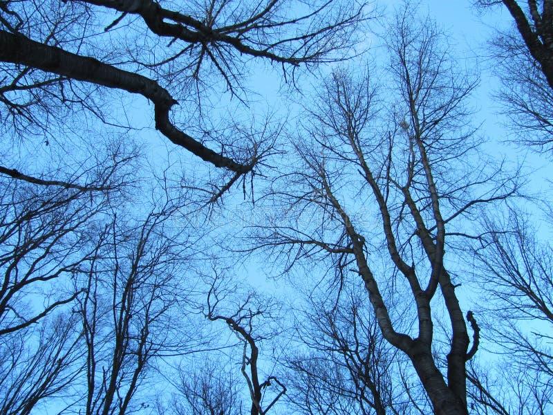 Ramos de árvore pretos no fundo do céu imagem de stock