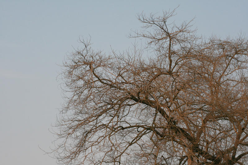 Ramos de árvore secados com luz não ofuscante no verão fotos de stock royalty free