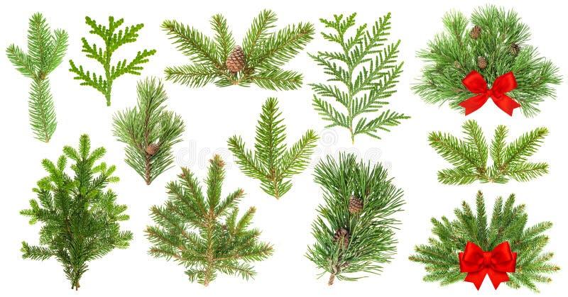 Ramos de árvore sempre-verdes Fita do vermelho da decoração do Natal fotos de stock royalty free