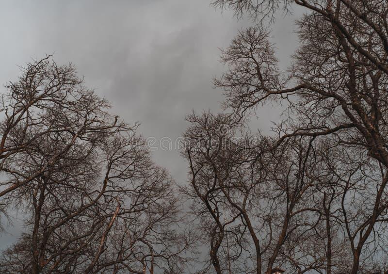 Ramos de árvores desencapados e um céu do inverno imagem de stock
