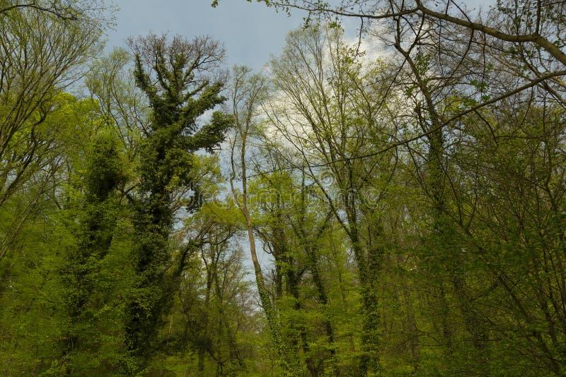 Ramos de árvores na primavera imagem de stock royalty free
