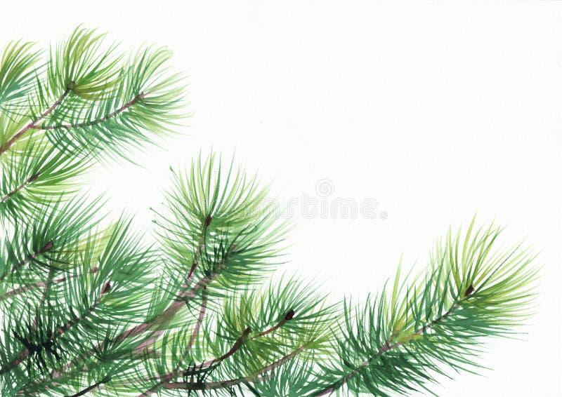 Ramos de pinheiro ilustração royalty free