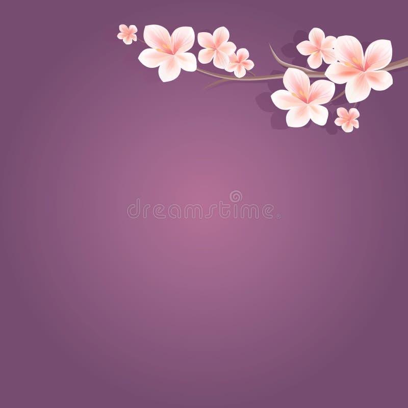 Ramos de sakura com luz - flores brancas cor-de-rosa no fundo violeta roxo flores da Apple-árvore Cherry Blossom Vetor ilustração stock