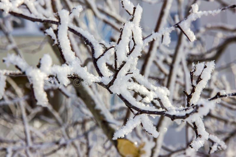 Ramos de uma árvore de bordo sob a neve fotografia de stock royalty free