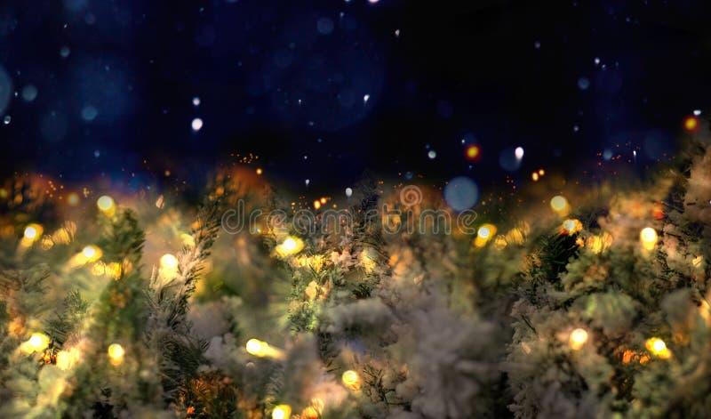 Ramos de uma árvore de Natal na neve e de uma festão em um fundo escuro foto de stock royalty free