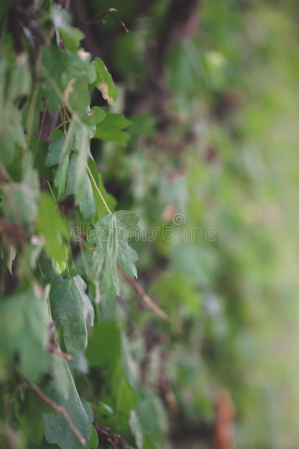Ramos de uma planta espessa com folhas imagens de stock