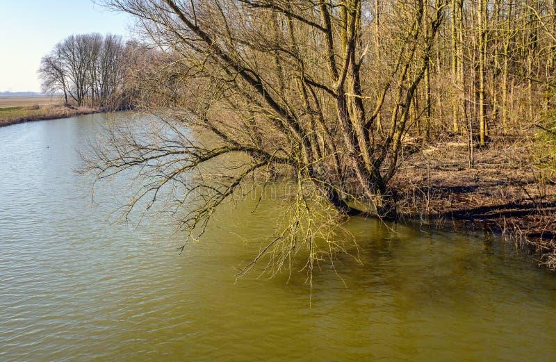 Ramos desencapados de uma árvore que pende sobre acima de uma angra imagem de stock