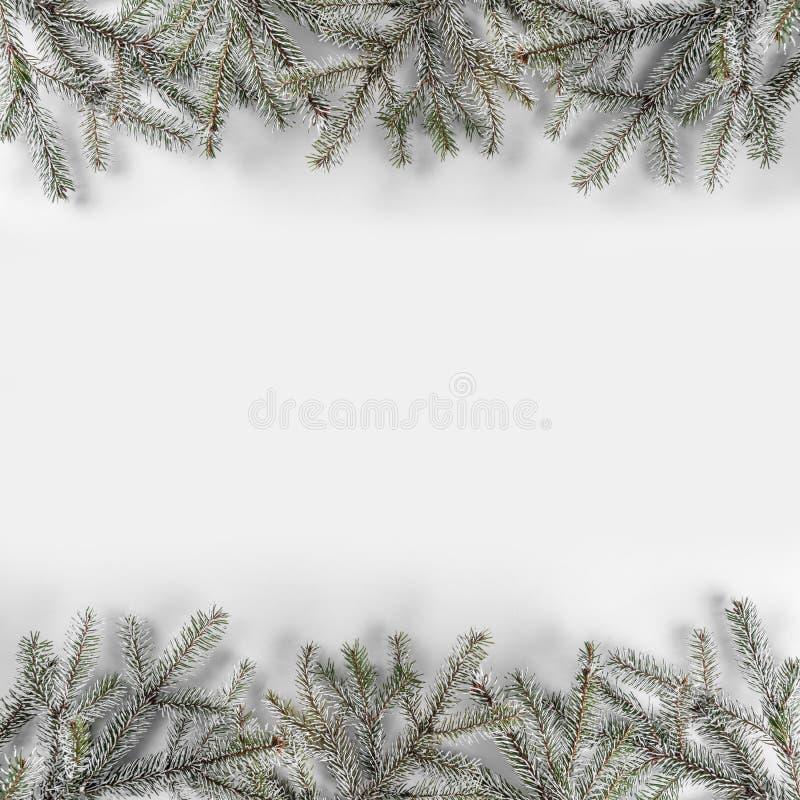 Ramos do abeto do Natal no fundo branco com flocos de neve Tema do Xmas e do ano novo imagem de stock royalty free