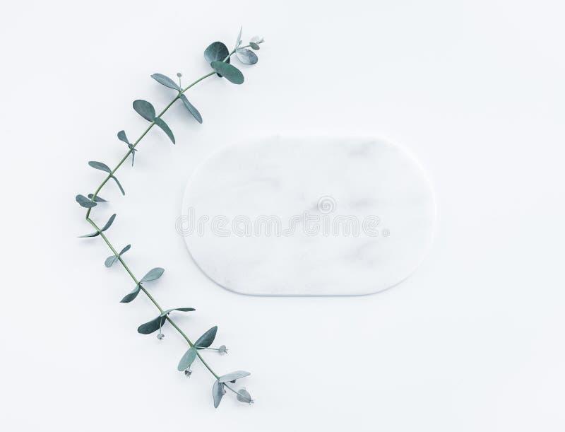 Ramos do eucalipto e placa de mármore vazia fotos de stock