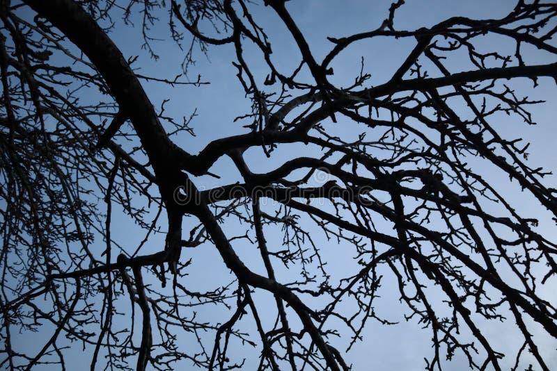 Ramos do inverno na silhueta no crepúsculo com céu azul fotos de stock royalty free