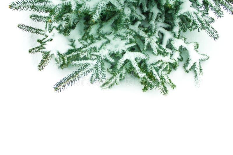 Ramos do pinho com neve no fundo branco fotos de stock royalty free